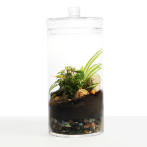 MuddyToesclosed_tall_terrarium_01-1-300x300