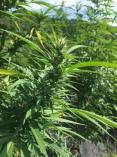 Fancy Plants