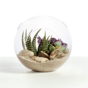 Muddy Toes Terrariums