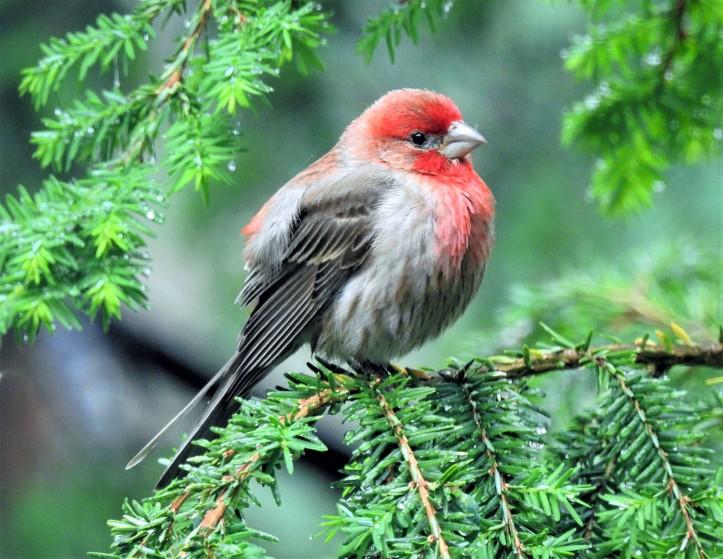 Pond House Birds Photography